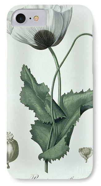 Opium Poppy Papaver Somniferum IPhone Case by LFJ Hoquart