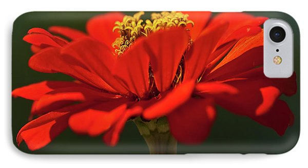 IPhone Case featuring the photograph Orange Aster-a Bee's Eye View by Onyonet  Photo Studios