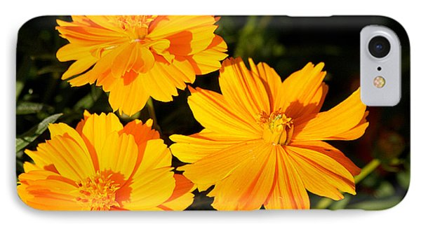 IPhone Case featuring the photograph Cosmos Trio by Sheila Brown