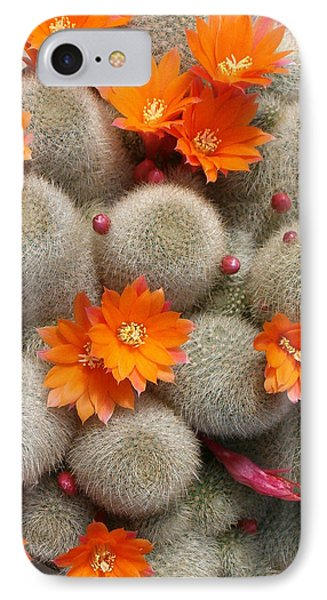Orange Cactus Flowers IPhone Case by Mark Barclay