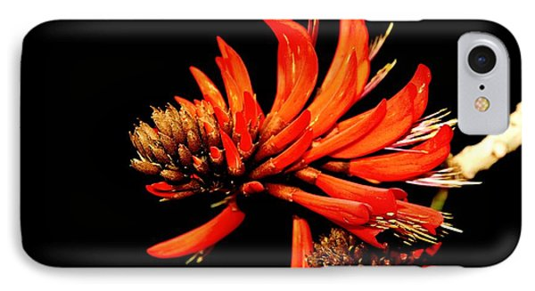 IPhone Case featuring the photograph Orange Clover II by Stephen Mitchell