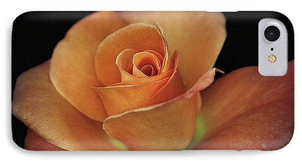 Orange Cream IPhone Case by Elaine Malott