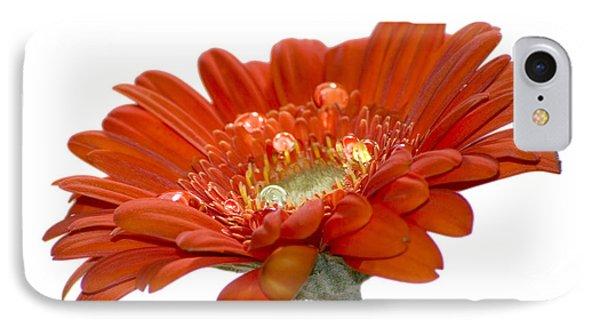 Orange Daisy Gerbera Flower Phone Case by Pixie Copley