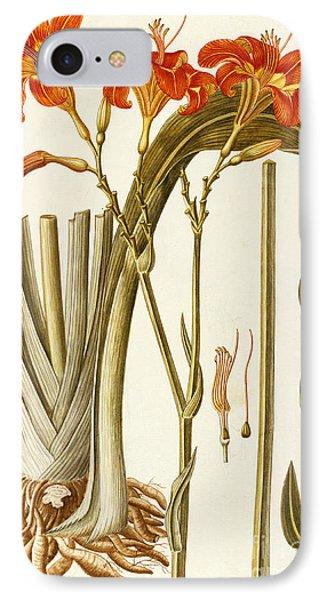 Orange Daylily IPhone Case by Giovanni Antonio Bottione