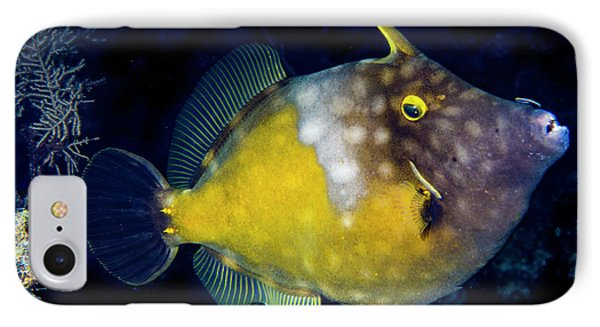 IPhone Case featuring the photograph Orange Filefish by Jean Noren