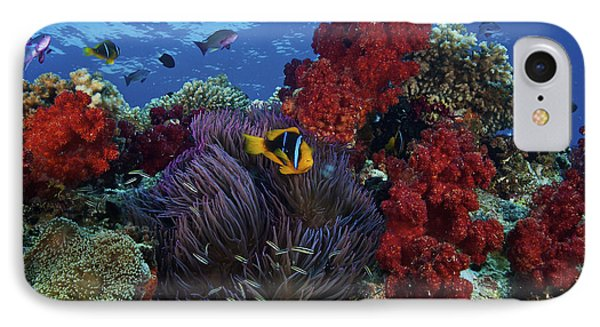 Orange-finned Clownfish And Soft Corals Phone Case by Terry Moore