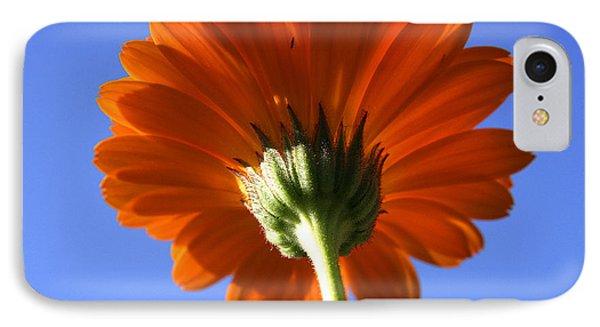 Orange Gerbera Flower IPhone Case by Ralph A  Ledergerber-Photography