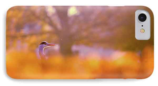 Orange Haze -blue Heron In Autumn Scene IPhone Case by Roeselien Raimond