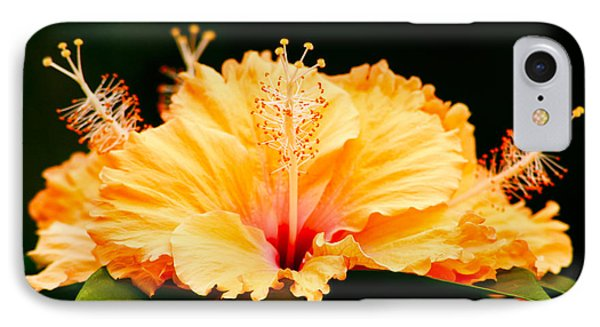 Orange Hibiscus IPhone Case by Rob Tullis