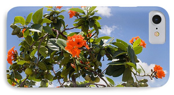 Orange Hibiscus With Fruit On The Indian River In Florida Phone Case by Allan  Hughes