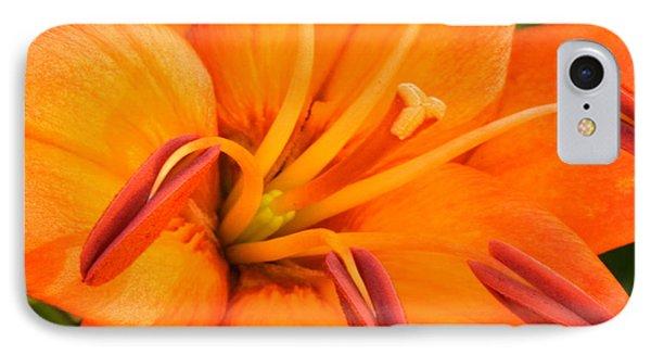 Orange II Phone Case by Amanda Kiplinger