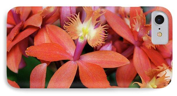 Orange Pink Epidendrum Orchid IPhone Case