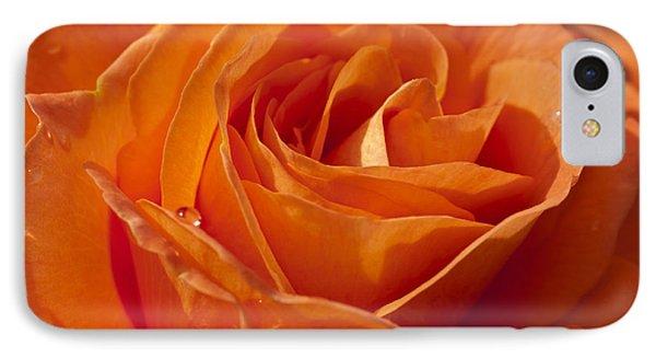 Orange Rose 2 IPhone Case by Steve Purnell