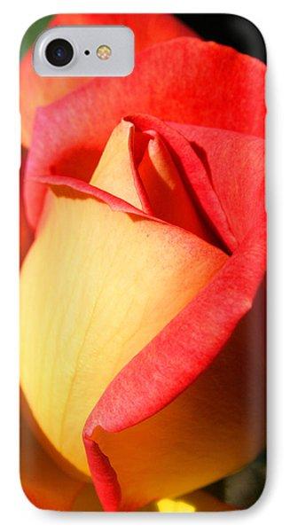 Orange Rosebud IPhone Case by Ralph A  Ledergerber-Photography