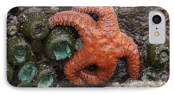 Orange Starfish And Anemonies IPhone Case
