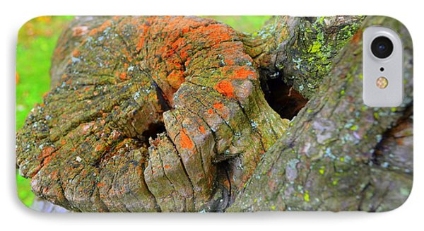 Orange Tree Stump IPhone Case