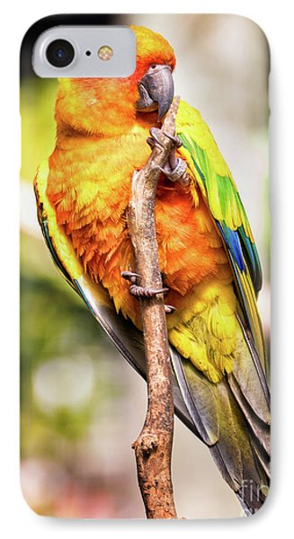Orange Yellow Parakeet IPhone Case by Stephanie Hayes