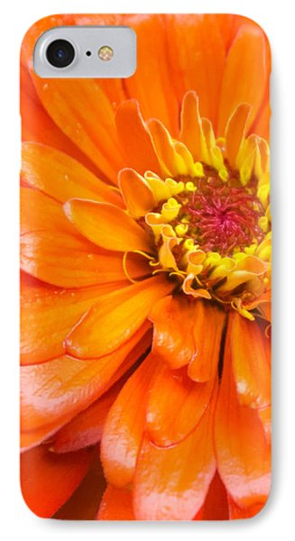 Orange Zinnia After A Rain IPhone Case by Jim Hughes