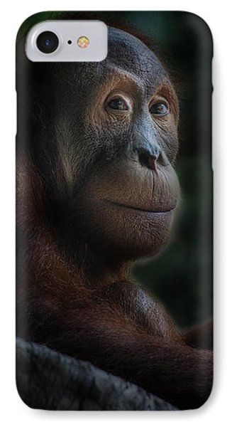 Orangutan Session IPhone Case by CR  Courson