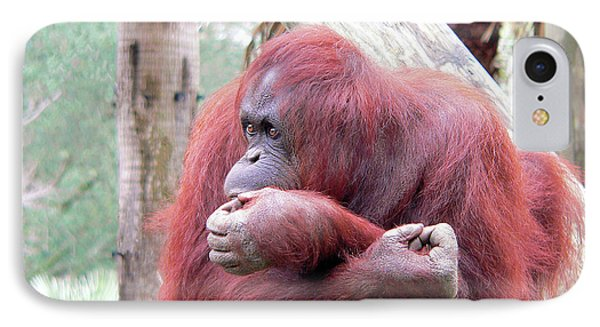 Orangutang Contemplating IPhone Case by Rosalie Scanlon