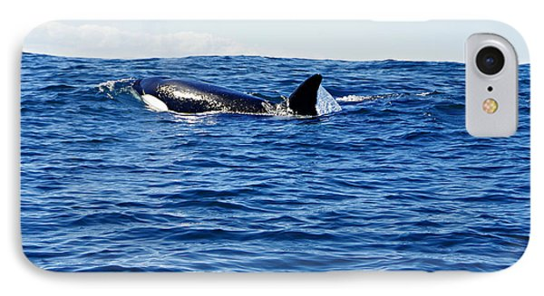 Orca IPhone Case by Marilyn Wilson