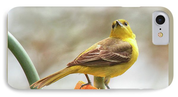 IPhone Case featuring the photograph Orchard Oriole by Debbie Stahre