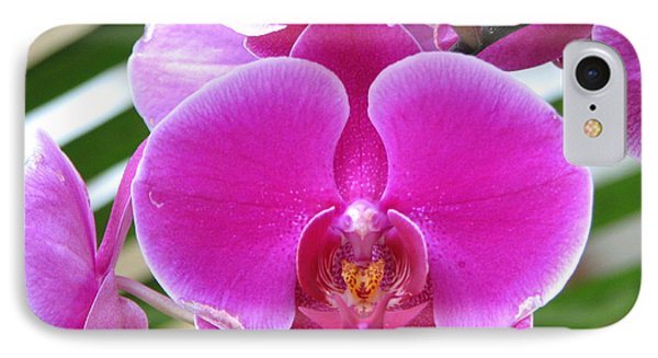 Orchid 8 IPhone Case by David Dunham