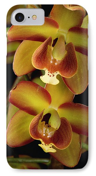 Orchid Eriopsis Sceptrum, Sipapo Tepui Phone Case by Mark Moffett