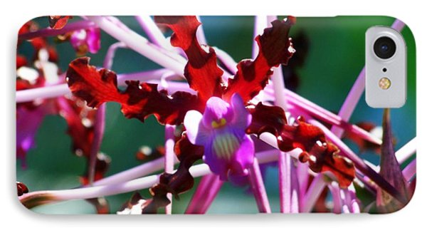 Orchid Spider Phone Case by Karen Wiles