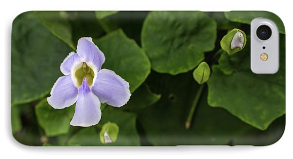 Orchids  IPhone Case by Jingjits Photography