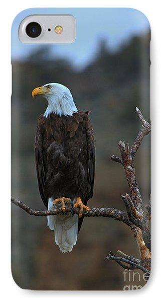 Oregon Bald Eagle IPhone Case by Adam Jewell