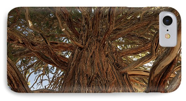 Oregon State Champion Western Juniper IPhone Case by Leland D Howard