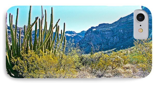 Organ Pipe Cactus In Arch Canyon In Organ Pipe Cactus National Monument-arizona  IPhone Case by Ruth Hager