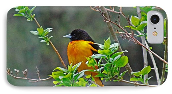 Oriole On The Lilac IPhone Case by Larry Capra