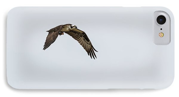 IPhone Case featuring the photograph Osprey 2017-2 by Thomas Young