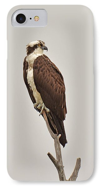 Osprey IPhone Case by Alan Lenk