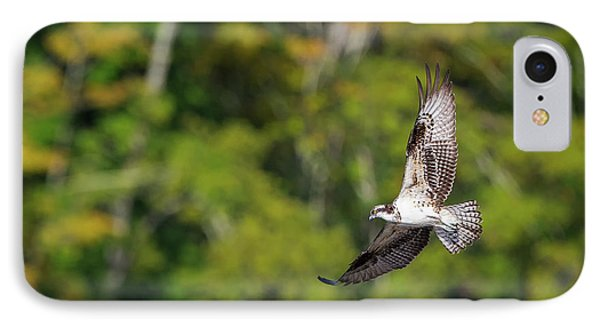 Osprey IPhone 7 Case by Bill Wakeley