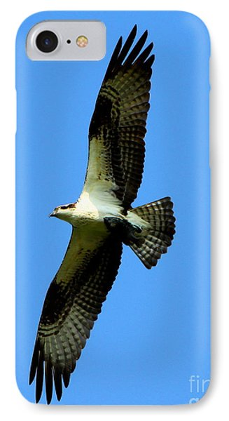 Osprey Carrying A Fish Phone Case by Barbara Bowen