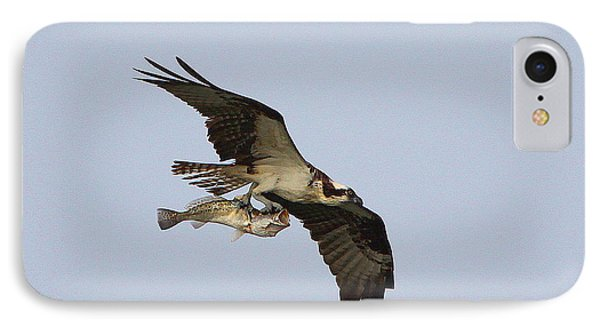 Osprey Catches A Fish IPhone Case by Barbara Bowen