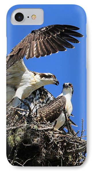 Osprey Chicks Ready To Fledge IPhone Case by Debbie Stahre