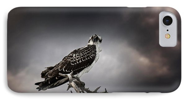 IPhone Case featuring the photograph Osprey by Chrystal Mimbs