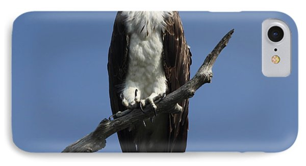 IPhone Case featuring the photograph Osprey Eyeing The Gulf by Barbara Bowen
