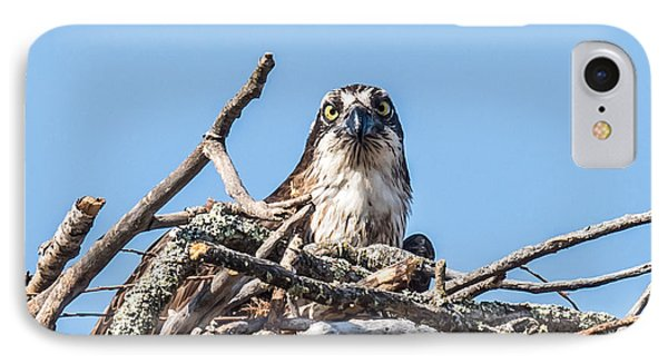 Osprey Eyes IPhone Case by Paul Freidlund