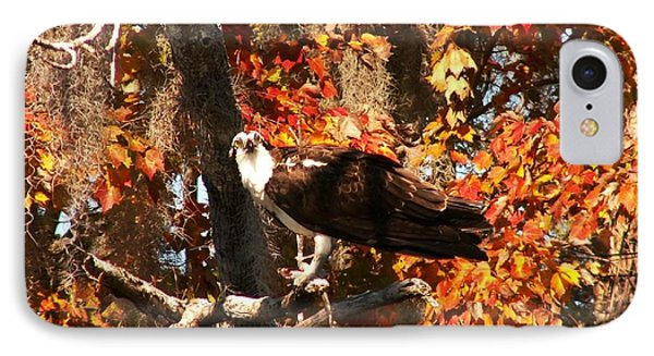 Osprey In Fall Phone Case by Theresa Willingham