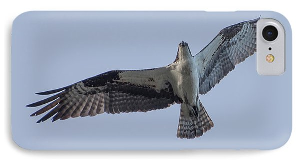 Osprey IPhone Case by Keith Boone