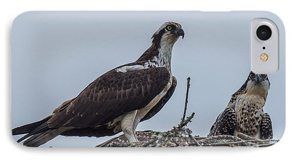 Osprey On A Nest IPhone Case