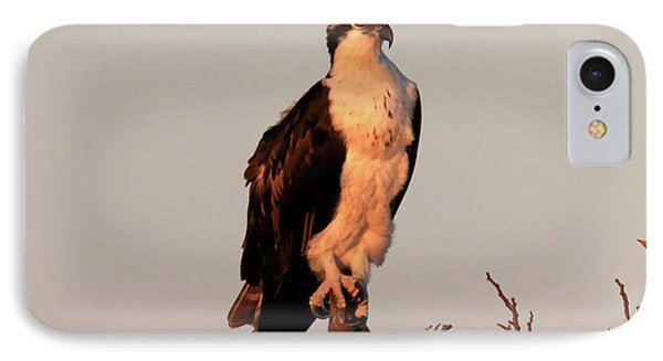 Osprey On The Caloosahatchee River In Florida Phone Case by Louise Heusinkveld