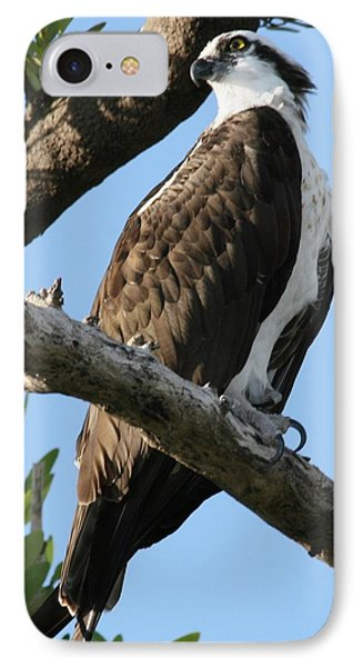 IPhone Case featuring the photograph Osprey - Perched by Jerry Battle