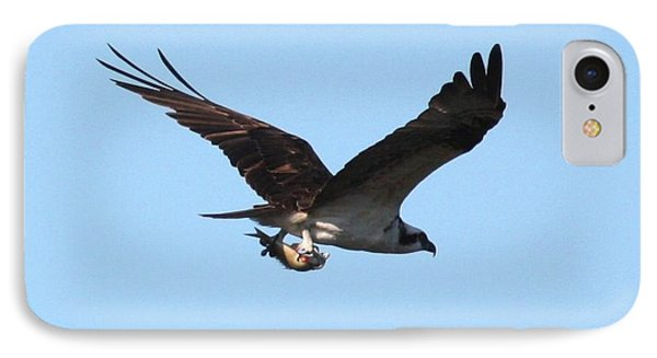 Osprey With Fish IPhone Case by Carol Groenen