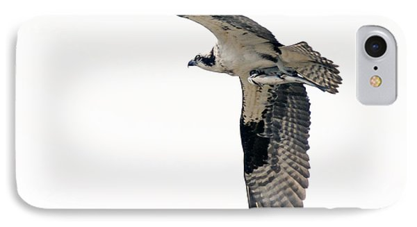 Osprey With Fish IPhone Case by Stephen  Johnson